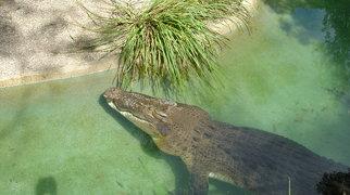 Australian Reptile Park>
