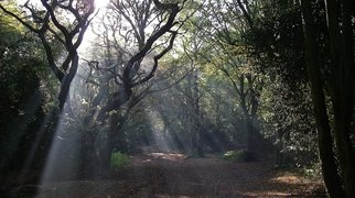 Hainault Forest Country Park>