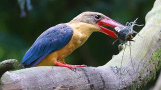 Singapore Zoo>