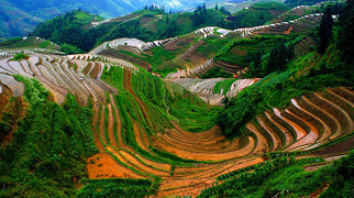 Longsheng Rice Terrace>