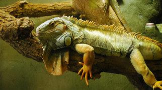 Reptilia (zoo)>