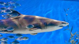 Melbourne Aquarium>
