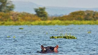 Lake Naivasha>