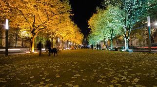 Unter den Linden>