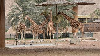 Al Ain Zoo>