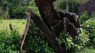 Amazon Stonehenge>