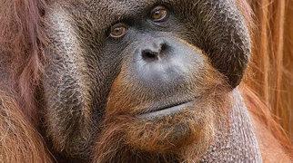 Apenheul Primate Park>