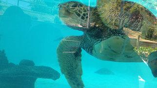 Aquarium des lagons>