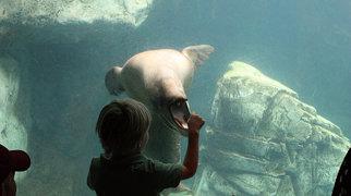 Aquarium of the Pacific>