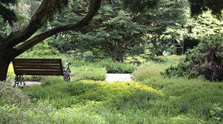 Kebun Botani Trompenburg>