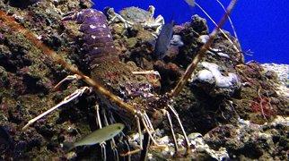 Argentario Aquarium>