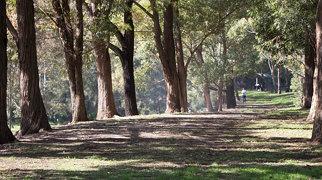 Auburn Botanic Gardens>