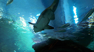 Bangkok Aquarium>
