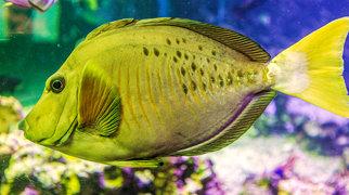 Bergen Aquarium>