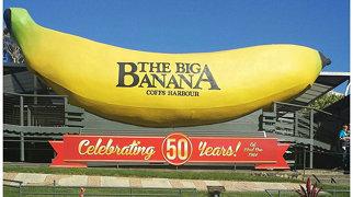 Big Banana>