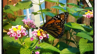 Bornholm Butterfly Park>