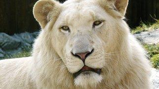 Ogród zoologiczny w Bratysławie>