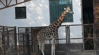 Bratislava Zoo>