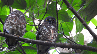 Bukit Timah Nature Reserve>