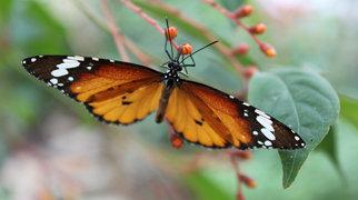 Butterfly Garden, Grevenmacher>