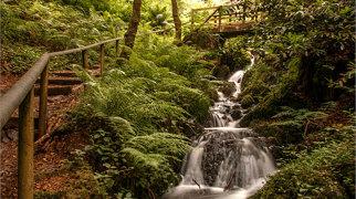 Canonteign Falls>