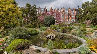 Chelsea Physic Garden>
