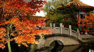 Chinese Garden Zürich>