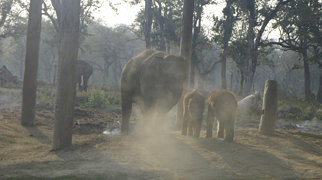 Chitwan National Park>