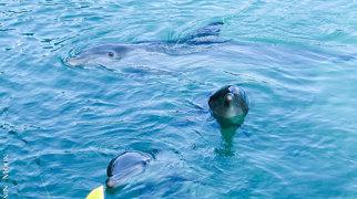 Dolphin Cove Jamaica>