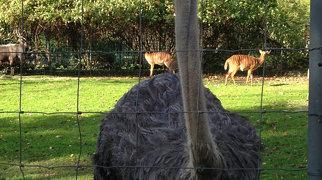 Dresden Zoo>
