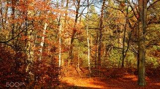 Dresdner Heide>