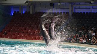 Dubai Dolphinarium>