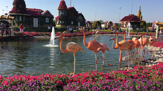 Dubai Miracle Garden>