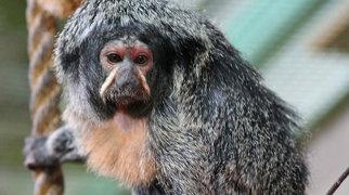 Dublin Zoo>