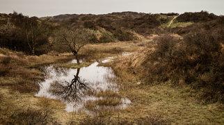 Dune du Perroquet>