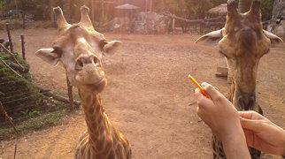 Dusit-Zoo>