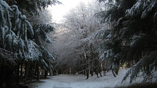 Eglinton Country Park>