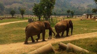 Elephant Nature Park>