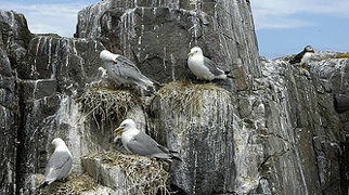 Farne Islands>
