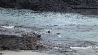 Galápagos Islands>