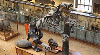 Galerie de paléontologie et d'anatomie comparée>