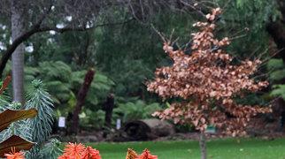 Geelong Botanic Gardens>