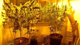Hash, Marihuana & Hemp Museum>