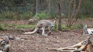 Healesville Sanctuary>