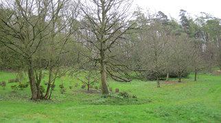 Hedingham Castle>