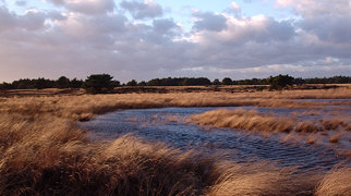Hoge Veluwe National Park>
