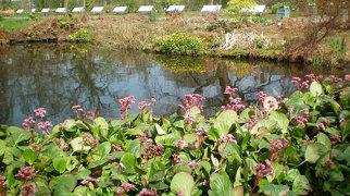 Hortus Botanicus Leiden>