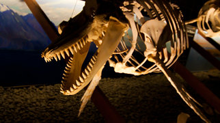 Húsavík Whale Museum>