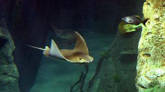 Istanbul Aquarium>