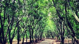 Johannesburg Botanical Garden>